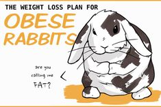 Obesity in rabbits is associated with heart disease and fatty liver disease. Carrying extra weight can be very dangerous. Rabbit Diet, Rabbit Eating, Rabbit Run, Pet Rabbit, French Lop Rabbit, Mini Lop Rabbit, Binky Bunny, Rabbit Playpen, Rabbit Behavior