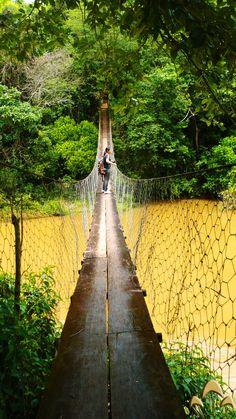 Ponte escorregadia chegando nas Cachoeiras da Maria na Serra da Canastra MG