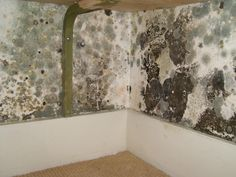 Mould Remediation -  Before