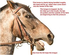 how to put a bridle on a horse