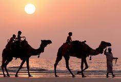Experience a Arabian sunset on a camel ride at The Ritz-Carlton, Dubai.