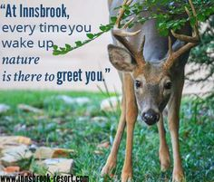 At Innsbrook, nature is always there to greet you!