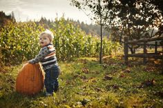 adorable fall themed baby photography done by Alante Photography.  WHOOO is ready for Pumpkins?! -www.donebrilliantly.com
