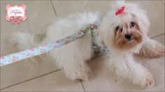 Como fazer uma linda Coleira Peitoral de Luxo Para Cães