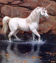 The white unicorn is the lovliest! Unicorn And Fairies, Unicorn Fantasy, Real Unicorn, Unicorn And Glitter, The Last Unicorn, Unicorns And Mermaids, Unicorn Horse, Real Mermaids, White Unicorn