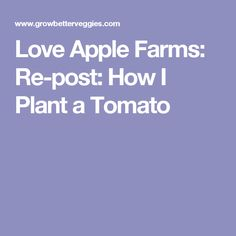 Love Apple Farms: Re-post: How I Plant a Tomato