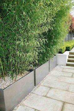 Bambuspflanzen in Pflankübeln als Sichtschutz für den Balkon