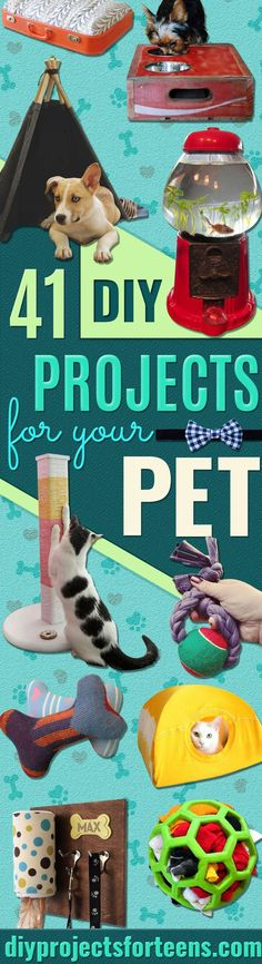 DIY Projects for Your Pet -Cat and Dog Beds, Treats, Collars and Easy Crafts to Make for Toys - Homemade Dog Biscuits, Food and Treats - Fun Ideas for Teen, Tweens and Adults to Make for Pets  via @diyprojectteens Homemade Dog Toys, Diy Dog Toys, Lit Chat Diy, Diy Cat Bed, Animal Crafts, Cool Diy Projects, Diy Stuffed Animals, Pet Store, Diy Gifts