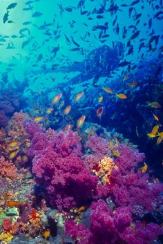 Zaki's Reef in the Red Sea, Egypt...I want to dive here!