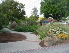 Lawn alternatives from California Native Plant Society.