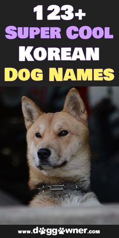 In this list, we will show the best Korean dog names that are original, fun, and have significant value behind each name. #koreandognames #dognames #dogs