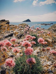 Beautiful landscape - take us there! Flowers, water and a view / beautiful nature photography Beautiful World, Beautiful Places, Wonderful World, Beautiful Beach, Beautiful Moments, All Nature, Pink Nature, Nature View, Adventure Is Out There