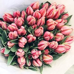 Ahhh I have such a weakness for tulips Can never go pass them without buying a bunch #kristjaanablossoms