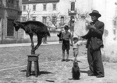 Américo Ribeiro - Saltimbancos, Setúbal, Portugal, 1954