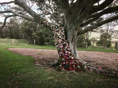 This is so dramatic and moody - love the light and ombre effect from the flowers! Yandina Station fig tree as a ceremony backdrop