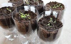 DIY Herb Garden: Soda bottles made into self-watering herb planters because herbs can be finicky about water, take the guess work out of herb gardening and watch them thrive! Empty Plastic Bottles, Recycle Plastic Bottles, Plastic Containers, Herb Planters, Garden Pots, Herbs Garden, Organic Gardening, Gardening Tips, Vegetable Gardening
