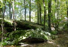 Visit our area's best kept secret, Beartown Rocks, located in Clear Creek State Park near Cook Forest! Enormous rock formations create fascinated hiking paths and breathtaking views!
