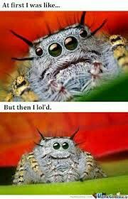 Funny and cute  spider