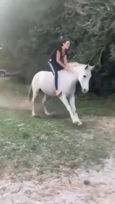 Funny Horse Videos, Funny Horse Pictures, Funny Horses, Cute Horses, Pretty Horses, Funny Animal Videos, Beautiful Horses, Animals Beautiful, Funny Dogs