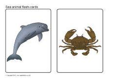 Sea animals picture flash cards