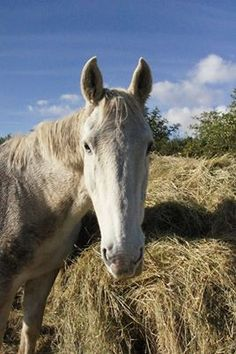 Sevastopol, a happy horse in his late twenties will live at the Horse Trust here in Buckinghamshire for the rest of his life, following the death of his owner. He is just one of the many horses you can adopt at The Horse Trust.