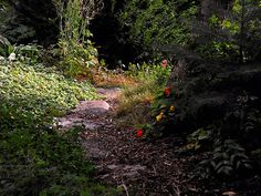 Path created with stones and bark for east sideyard