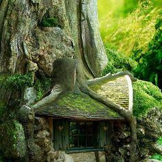 Lubię oglądać dziwne domy, bo inwencja ludzka w tym względzie bywa nieposkromiona. Rozumiem okazała rezydencja w stylu rococo! Rozumie wiejska posiadłość w stylu wiktoriańskim! Ale po co komu dom na drzewie? Albo chatka Hobbita? Zapewne potrzeby są różne. Ta najwyraźniejsza, którą widzę to potrzeba zabawy. Dzięki tej potrzebie i ja …