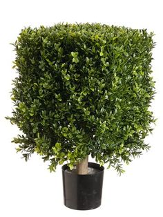 TWO 21' Artificial Outdoor Indoor Square Boxwood Topiary in Plastic Pot Two Tone Green -- Check this awesome product by going to the link at the image.