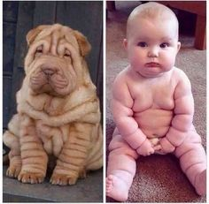 Funny Baby Images – Funny Pictures – Funny Baby – Funny Images – Funny Baby pictures For WhatsApp – Baby Funny Photos – Best Funny images – Most Funny Pictures – Latest Funny Baby Picture – Funny Baby Photos – Funny Baby Pictures For WhatsApp Funny Baby Photos, Best Funny Images, Funny Animal Pictures, Baby Images, Funny Babies, Funny Dogs, Cute Babies, Funny Kitties, Funny Horses