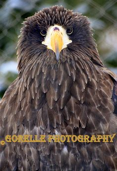 Todays Zoo Outing the Steller's Sea Eagle