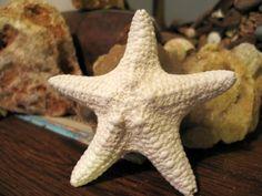 Coastal Home or Wedding Accents White Chunky Starfish Loose Sea Supplies. $3.95, via Etsy.