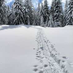 See 5 photos from 38 visitors to La trelasse. Altitude, Four Square, Restaurant, Snow, Outdoor, Winter Activities, Beautiful Places, Mountains, Exit Room