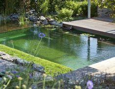 Natural pool design regeneration zone wooden deck