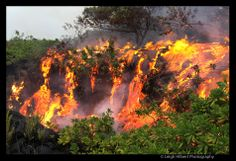 Hawaiian Lava Daily ~ Royal Gardens home overtaken by lava