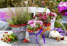 Wenn sich der Sommer dem Ende zuneigt, wird es Zeit für neue Pflanzen und Dekoration auf dem Balkon und der Terrasse. Hier haben wir für Sie ein paar Pflanztipps und Deko-Ideen zusammengestellt, die sich ohne großen Aufwand umsetzen lassen.
