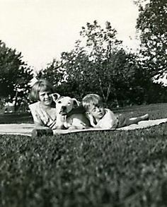 """Pit bull and human pack hanging out in the backyard    """"backyard"""" 