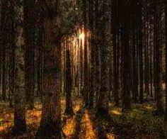 foresta nei sogni
