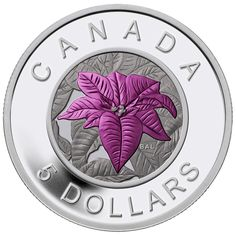 Fine Silver Coin with Niobium Colouring - Flowers in Canada Series - Poinsettia Poinsettia, Canadian Things, Canadian Artists, Bullion Coins, Silver Bullion, Mint Coins, Silver Coins, Coins For Sale, Commemorative Coins