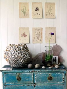 Love the Teal and sea shells and especially giant coral skeleton!