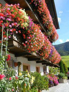 Flowery balconies