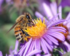 These fun 5 facts about bees will leave you speechless and will help you appreciate