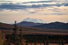 Denali from Stampede Trail. GORGEOUS.