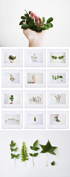 Examples of different styles of plant photography.