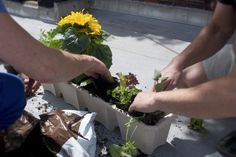 Beginner gardener: 10 tips for making a kitchen garden on the balcony – … - Garden Tips For Beginners Growing Beans, Growing Peppers, Growing Carrots, Growing Lettuce, Growing Cherry Tomatoes, Growing Spinach, Easy Vegetables To Grow, Organic Vegetables, Gardening For Beginners
