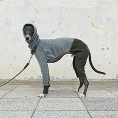 Clothing for Italian Greyhound / Good fit / Comfortable von SOIMA Italian Greyhound Puppies, Pet Clothes, Dog Clothing, Dog Wear, Dog Sweaters, Hound Dog, Cute Animal Pictures, Whippet, My Animal