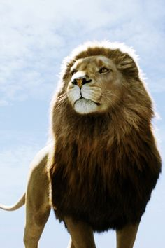 Aslan from The Chronicles of Narnia by C.S. Lewis