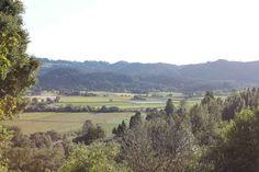 Vista from Tubbs Lane in Napa.