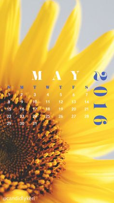 Wallpaper 2017 Calendar Free Nature Mobile Iphone Wallpapers Yellow Sunflower Background