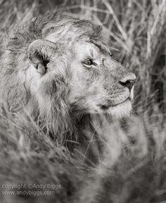 * Tanzanie _ photo Andy Biggs