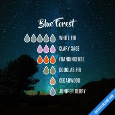 Blue Forest - Essential Oil Diffuser Blend